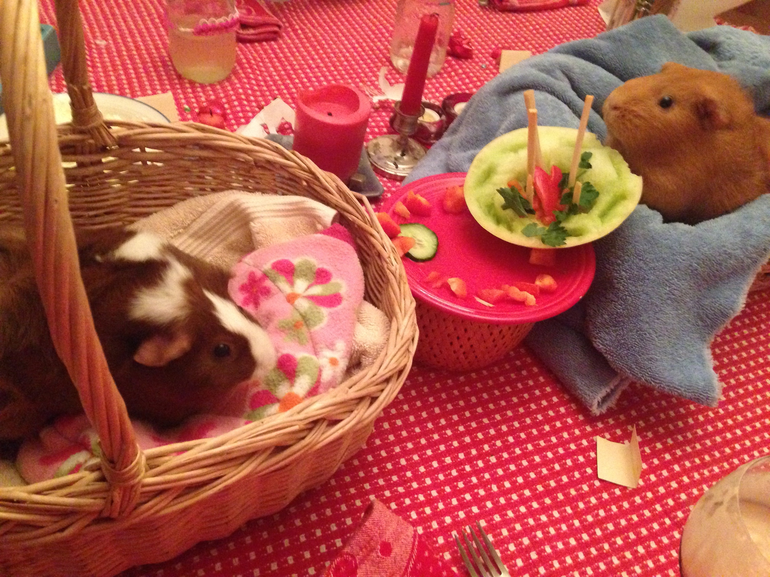 For those of you wondering about how the animals are doing this winter... Bud-Bud and Boo just celebrated a birthday. See them enjoying their veggie-cake with gusto.