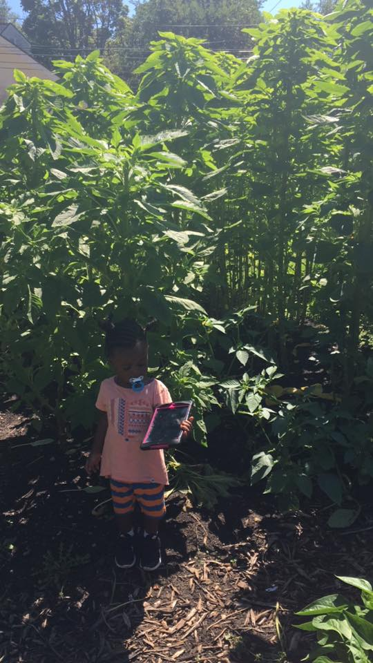 Callaloo-little one.jpg