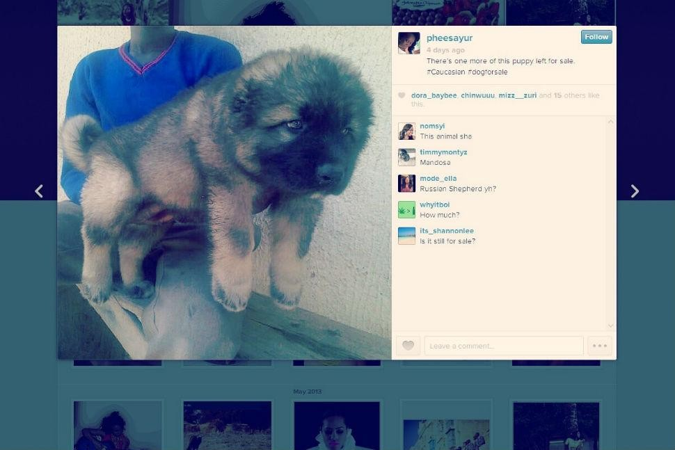 How much is that doggy in the Instagram? Things to consider before hitting up #petsforsale