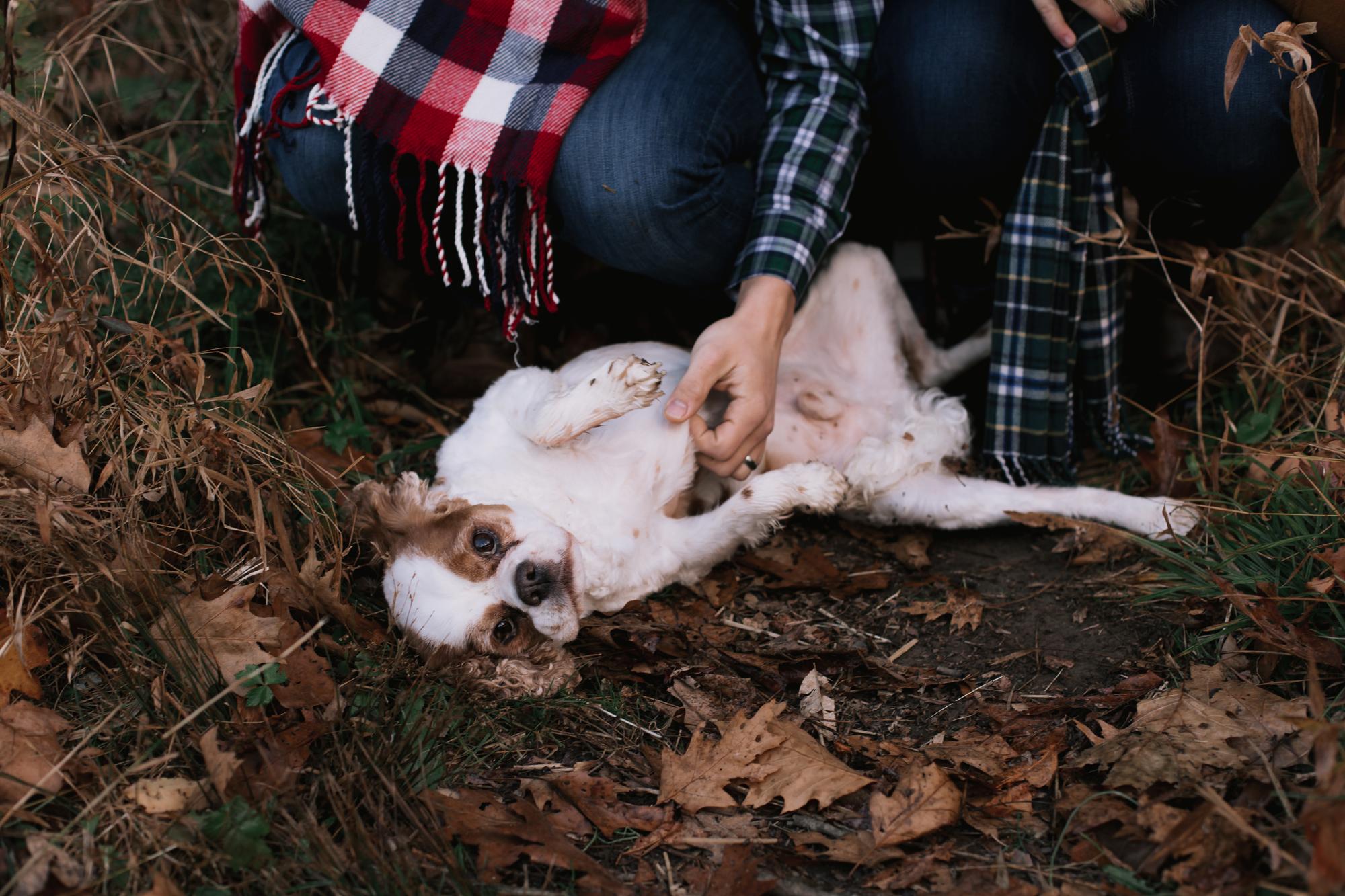 dog-photography-lehigh-valley-pa