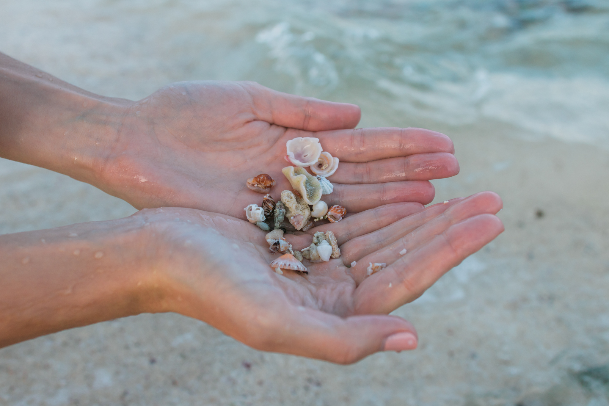 seashells-playa-del-carmen-beach