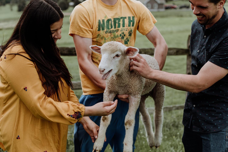 clinton-nj-engagement-photography-sheep
