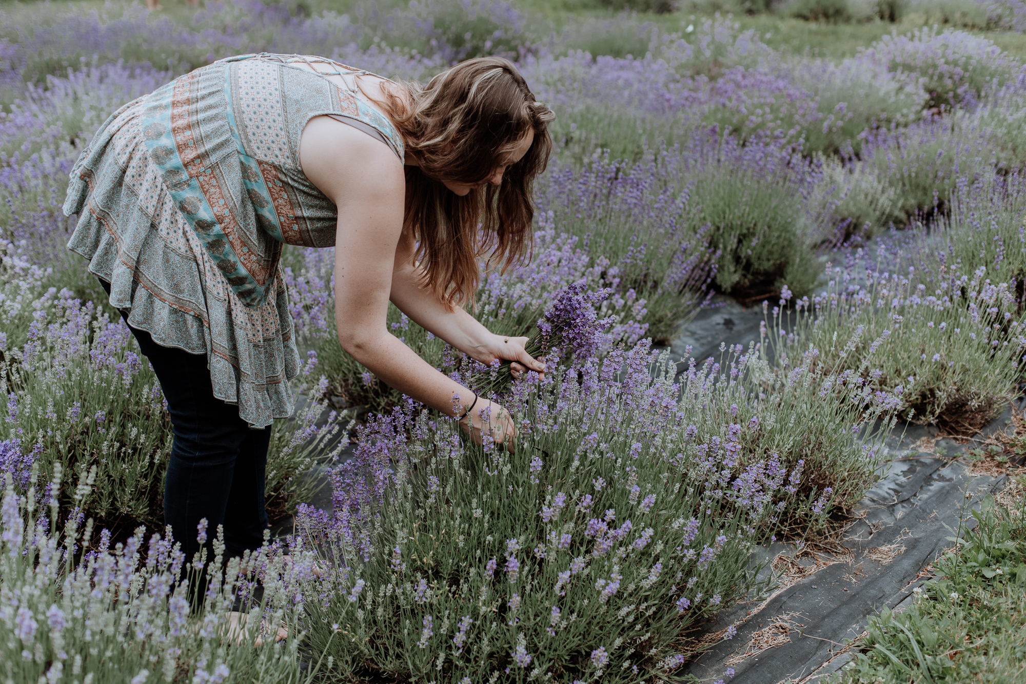 peace-valley-lavender-farm-natural-photography