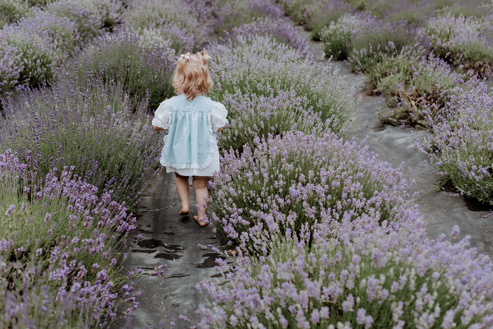 peace-valley-lavender-farm-natural-lehigh-valley-boho-photography