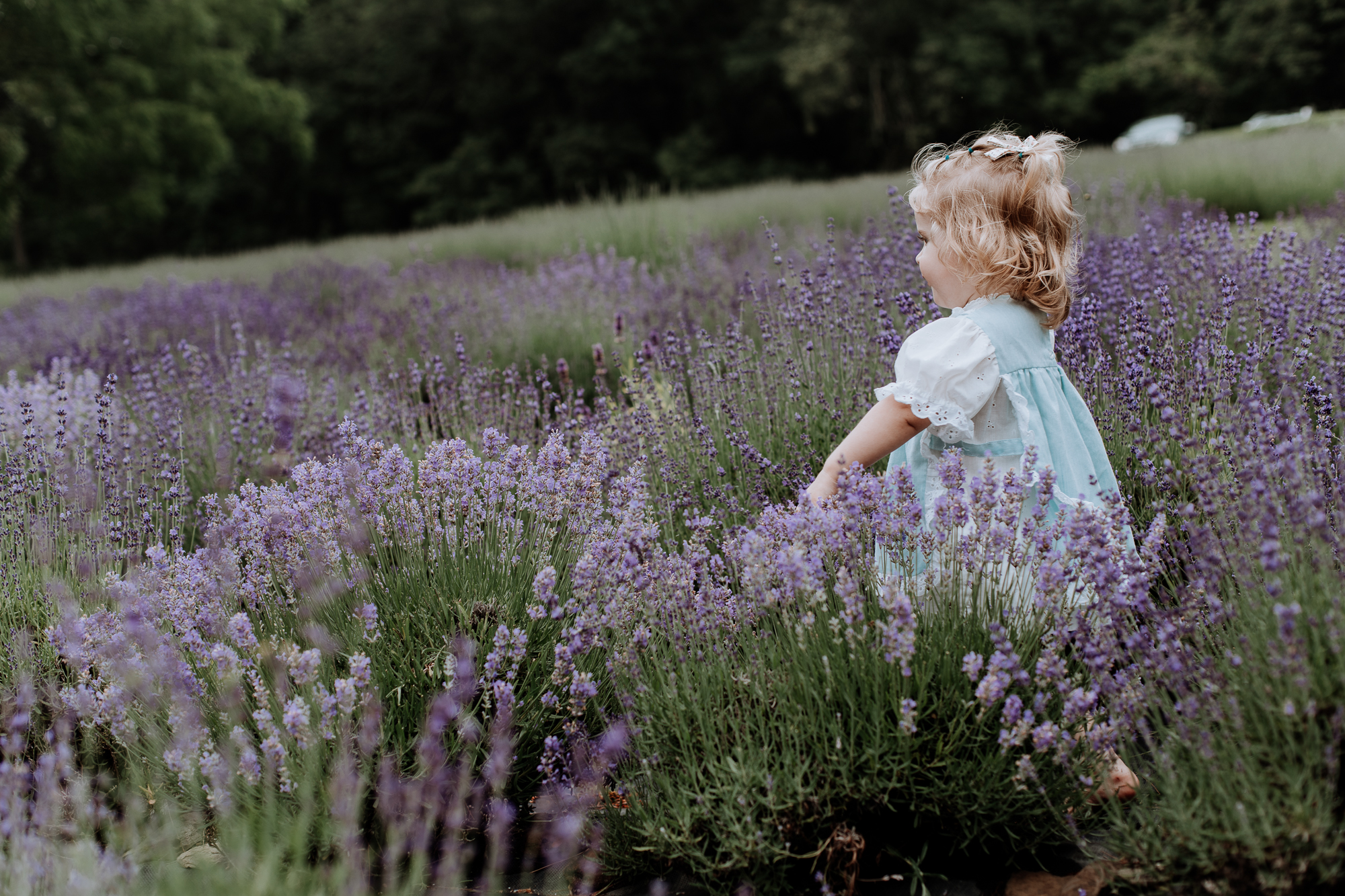 peace-valley-lavender-farm-natural-philadelphia-photography-3