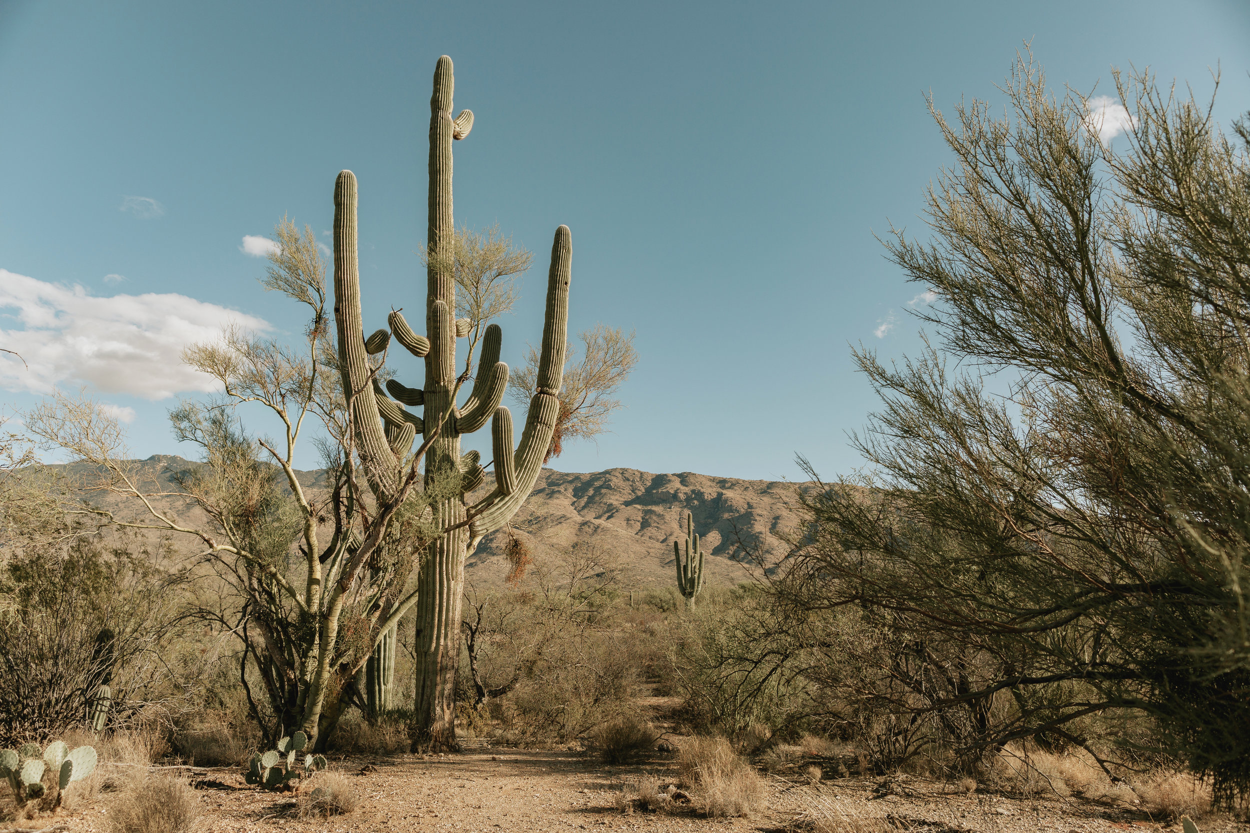 saguarro-national-park-arizona-photography