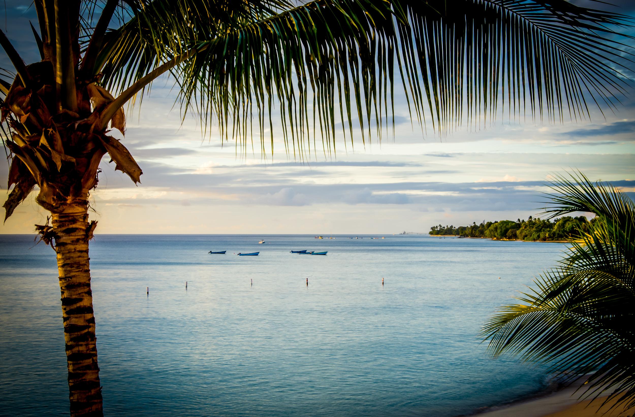Barbados Palm Tree HDR.jpg