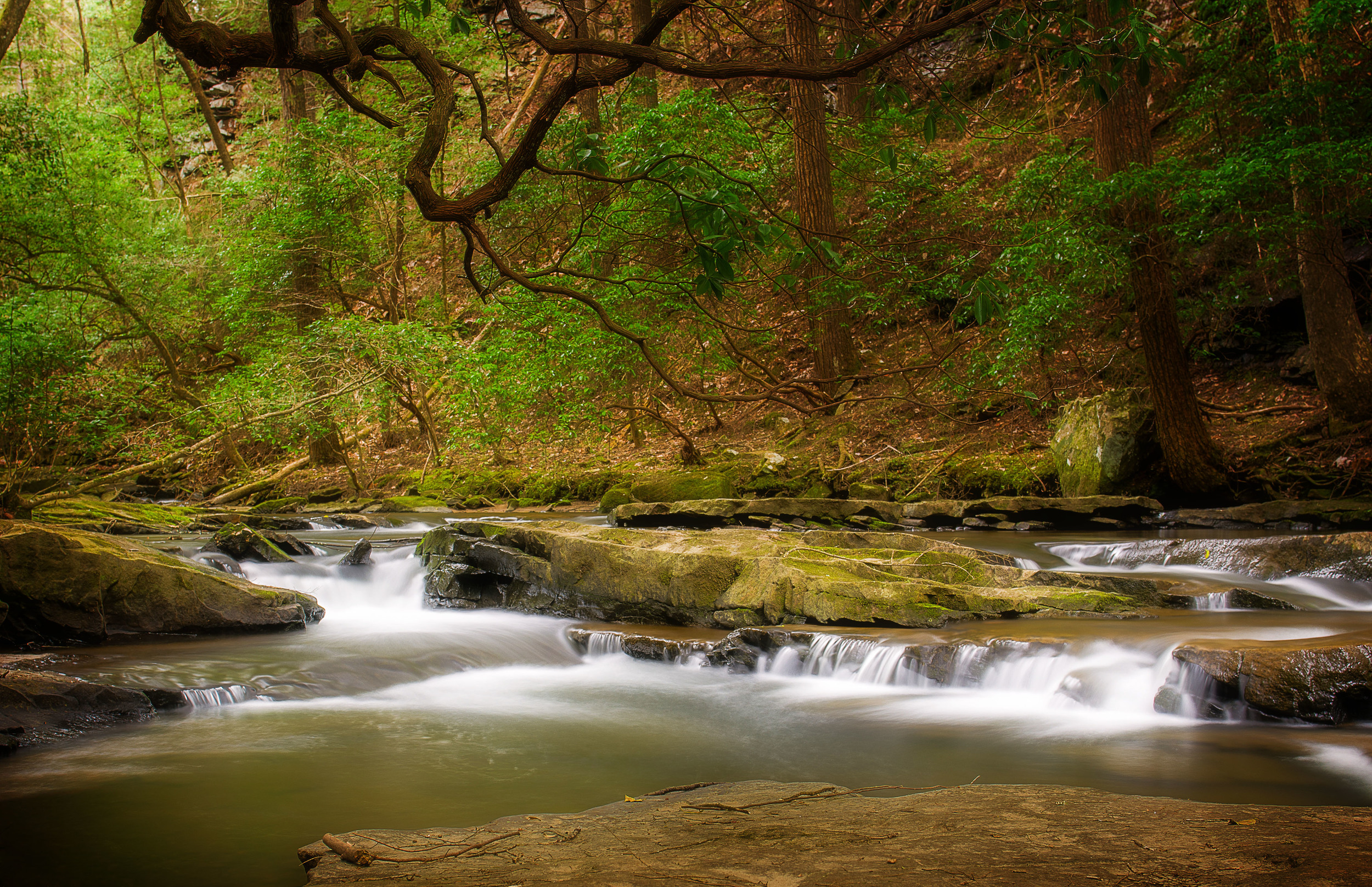 Cumberland State Park, Grundy Forest