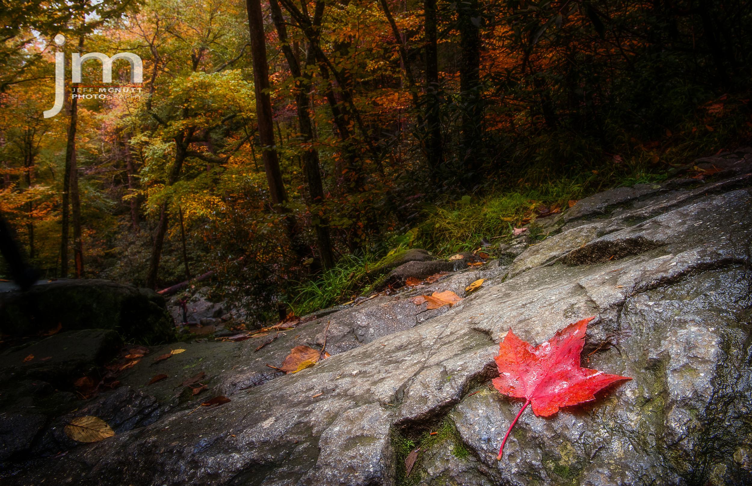 Laurel Falls, Great Smoky Mountains National Park
