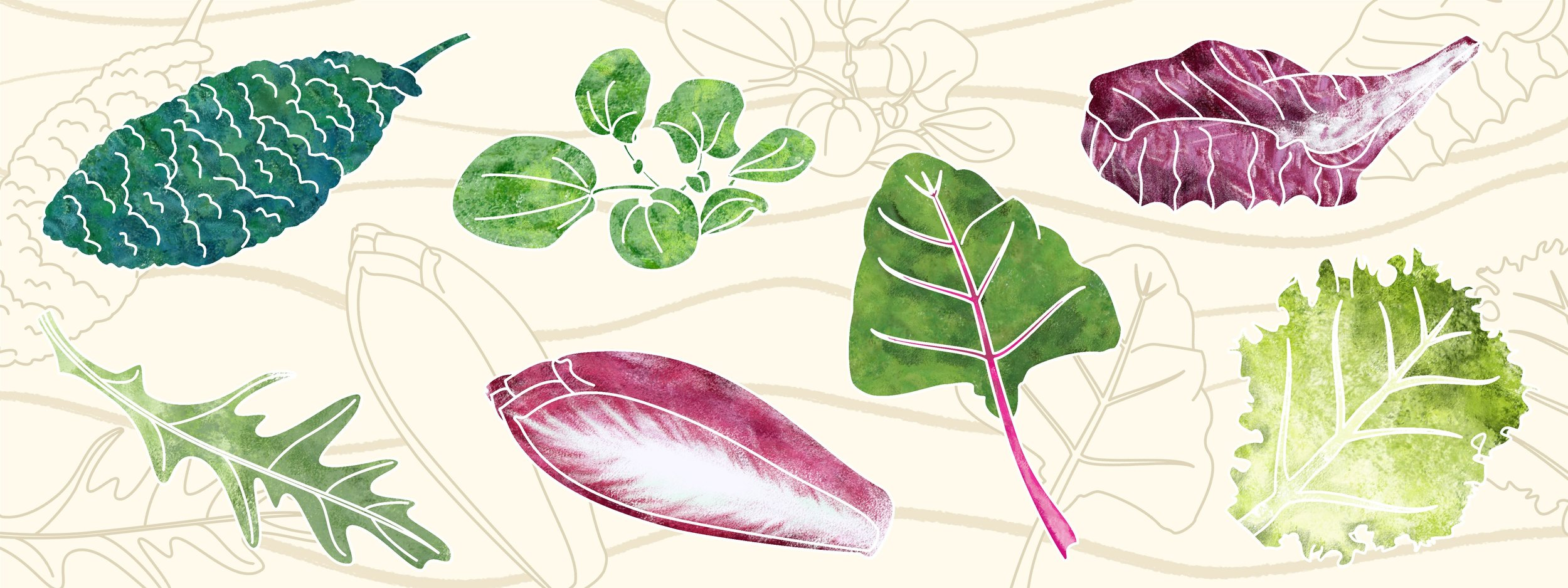 A feast of greens: kale, spinach, radicchio, lettuce, chard, endive, rocket.