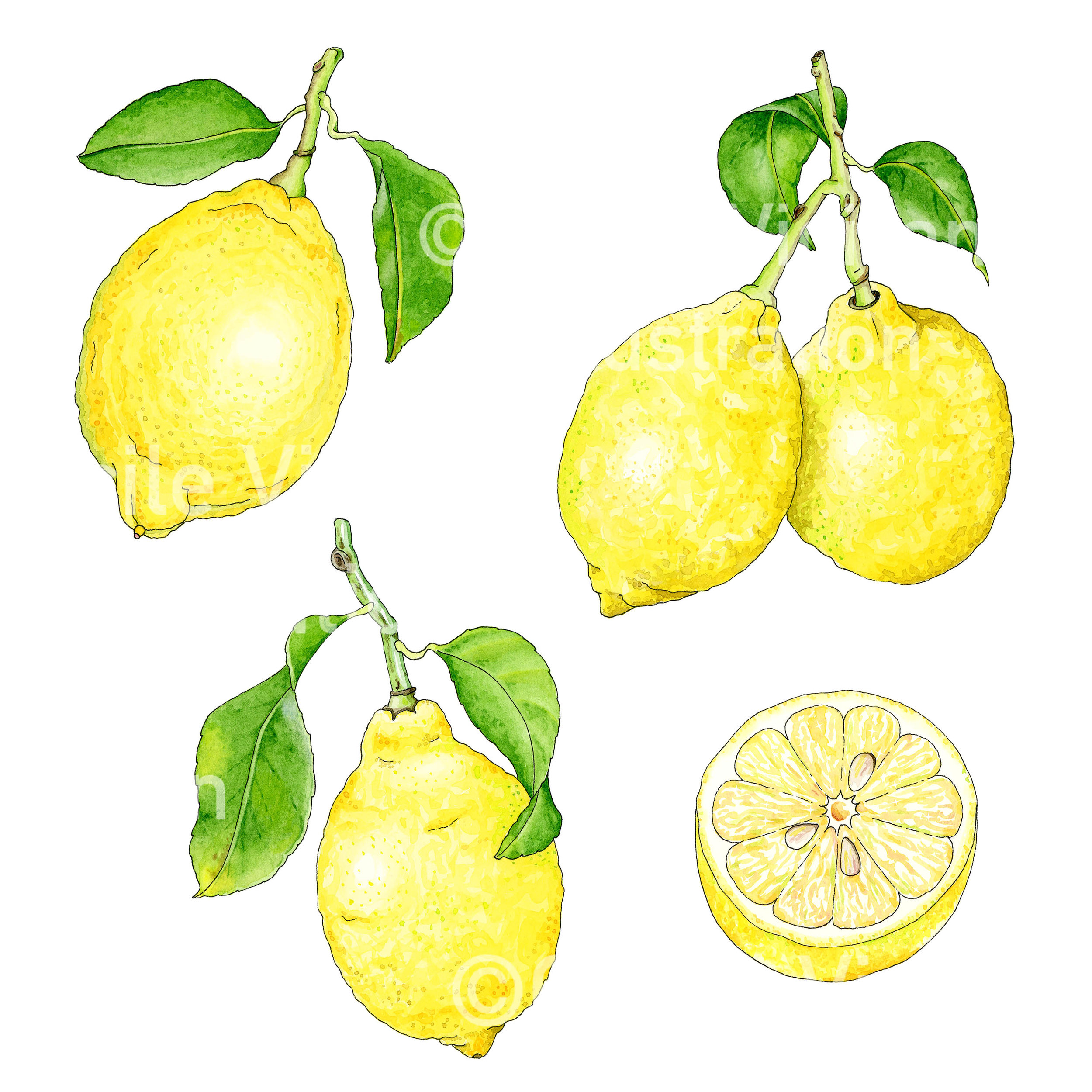 Eureka lemons, created for the  Lemonayo Kickstarter .