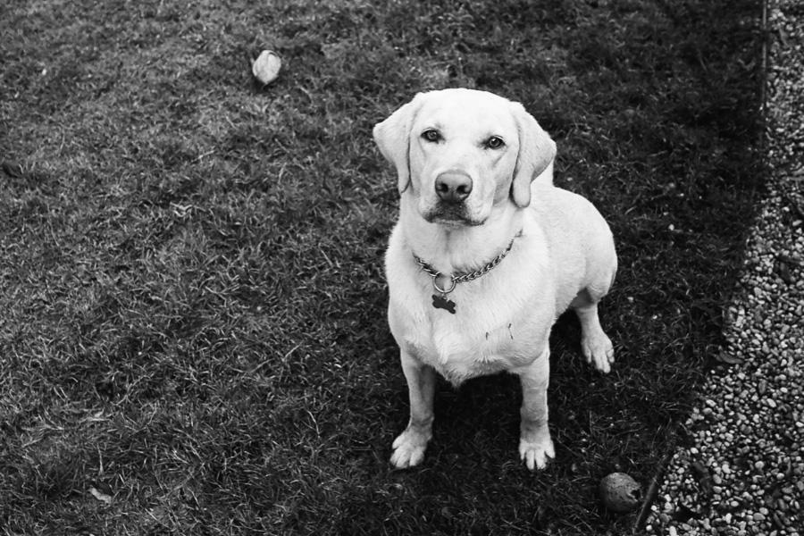 Pups - 2.jpg