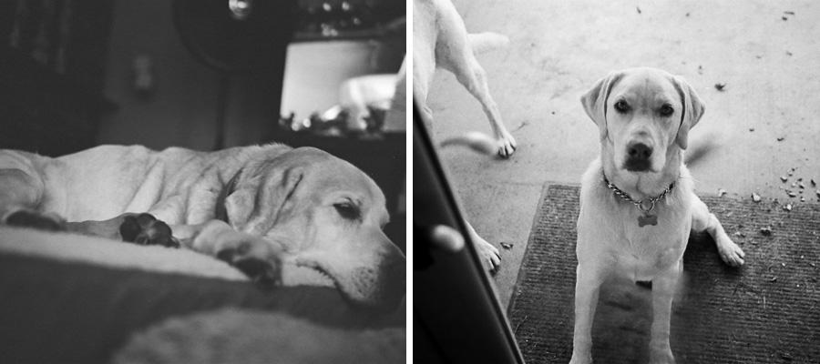 Pups - 3.jpg
