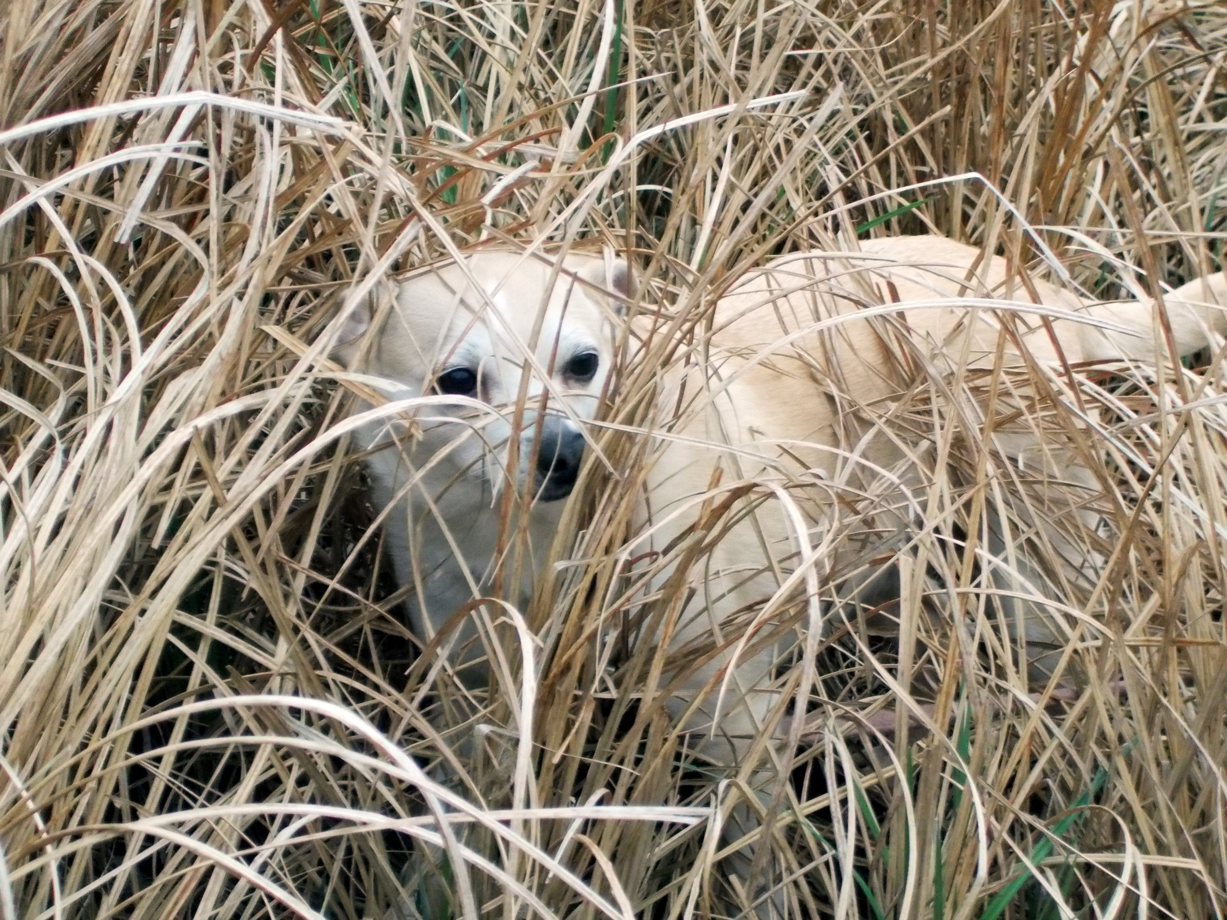Daisy in the weeds.jpg