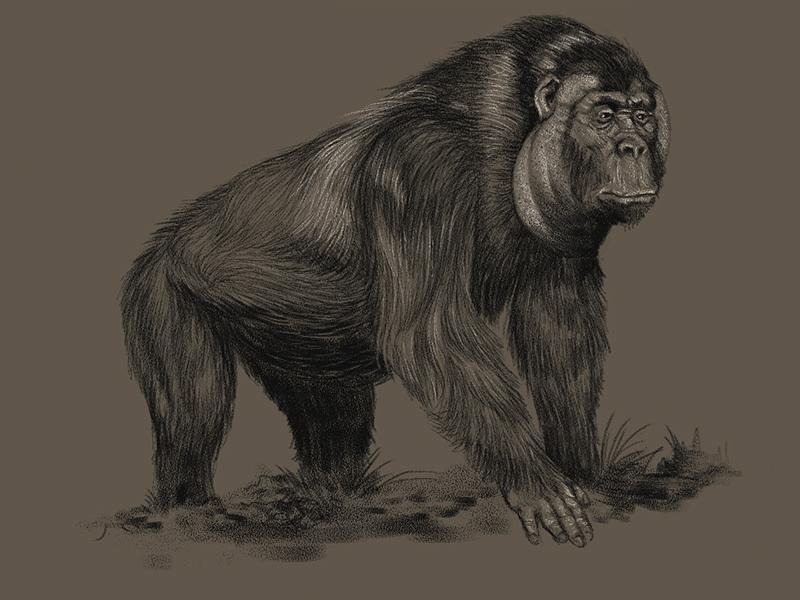 Megafauna_gorila.jpg