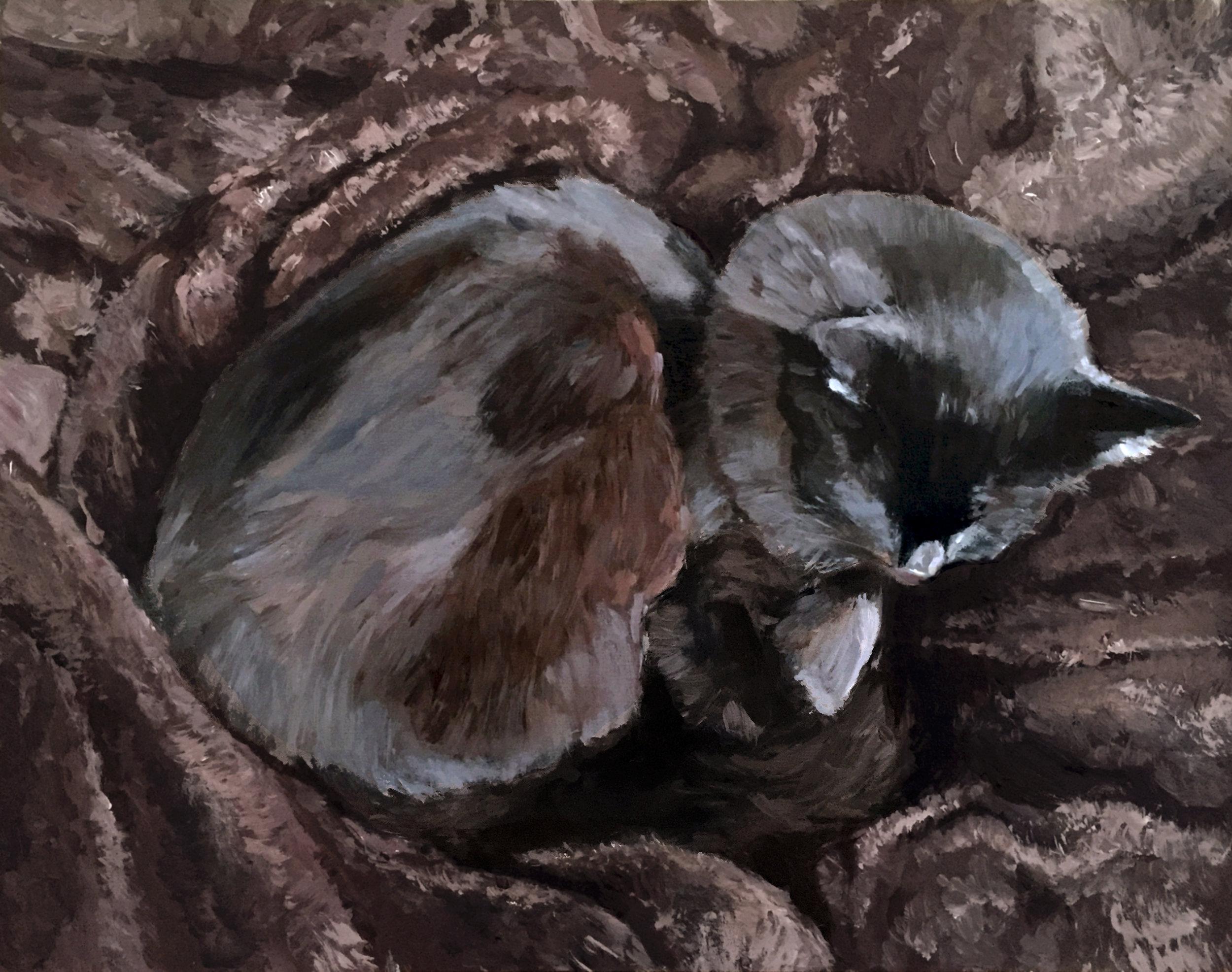 Black cat on a fuzzy blanket