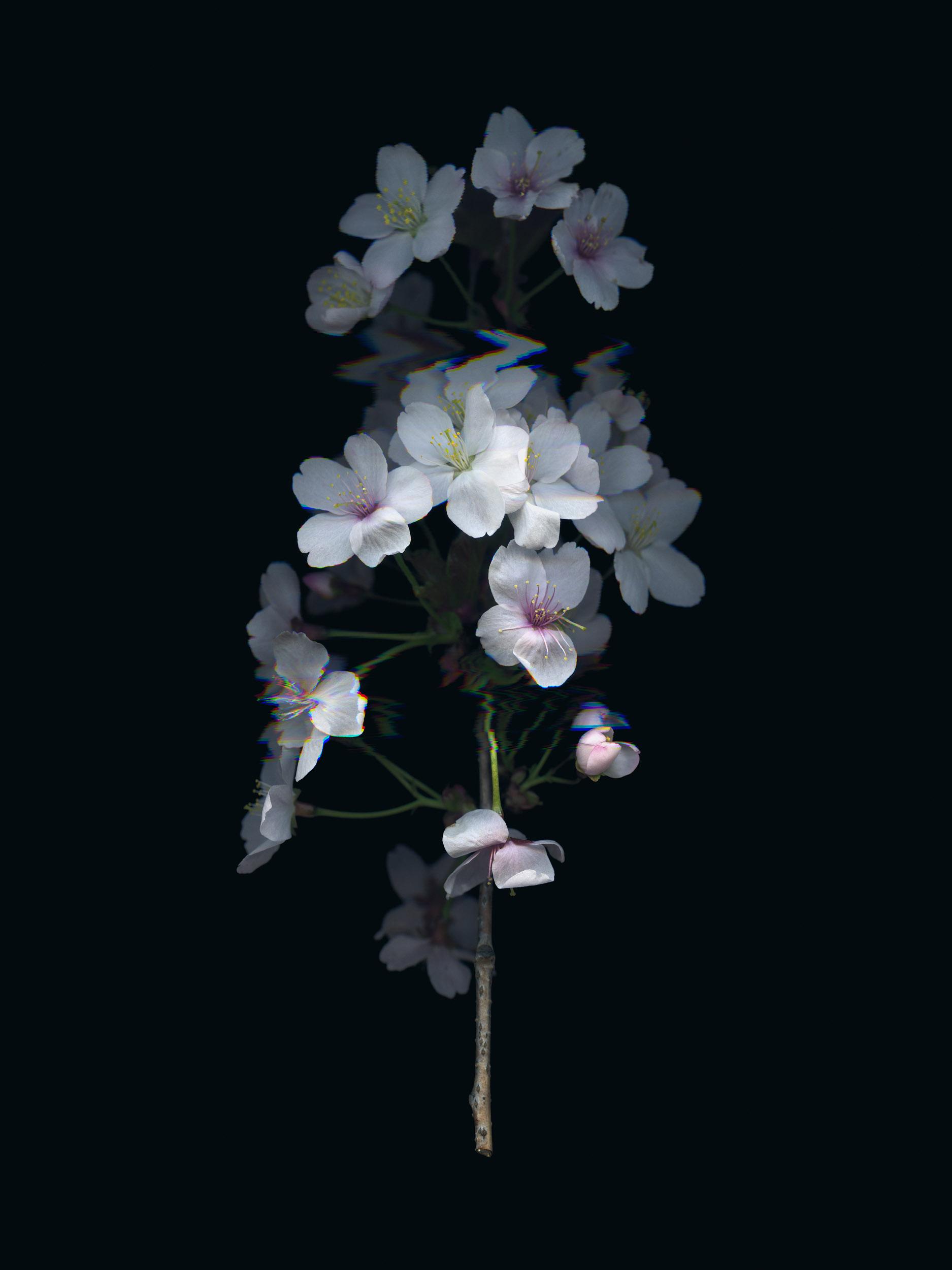 20190329 Fractured Botany-007.jpg