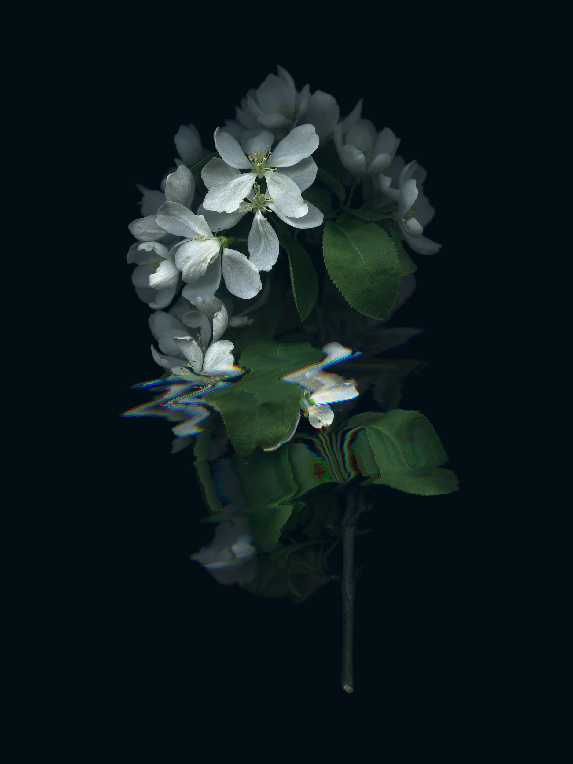 20190329 Fractured Botany-010.jpg