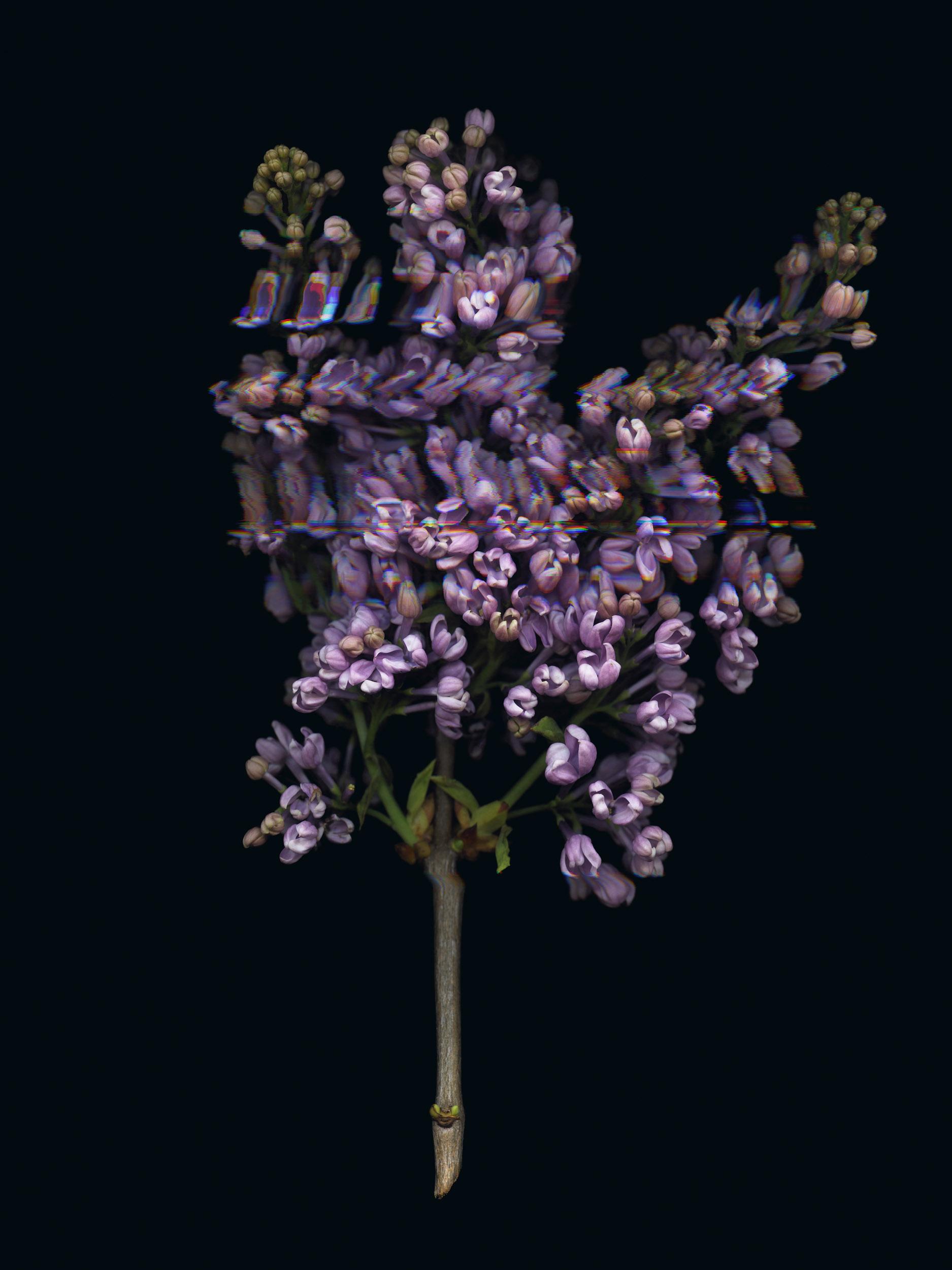 20190329 Fractured Botany-015.jpg