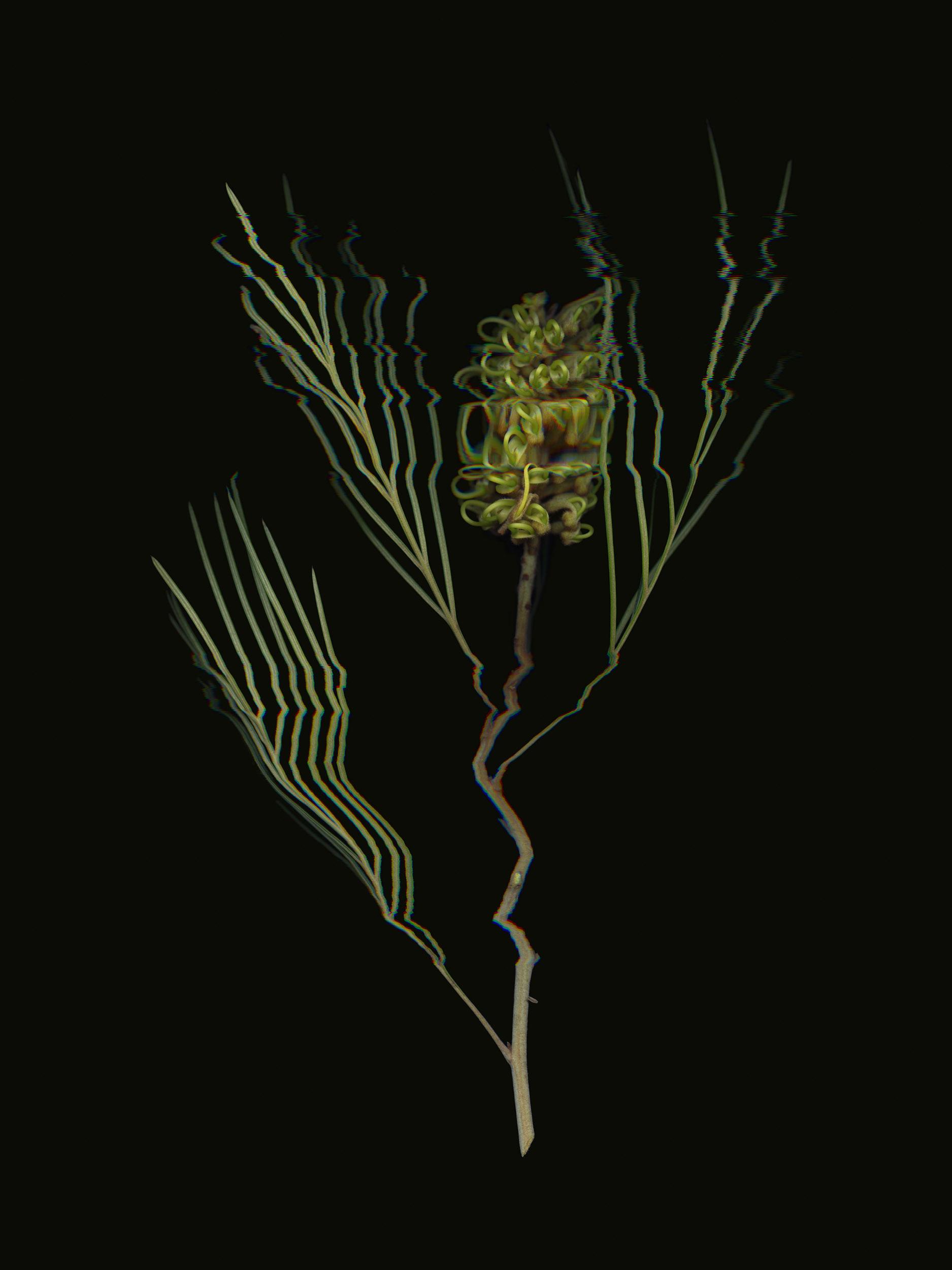 20190329 Fractured Botany-036.jpg