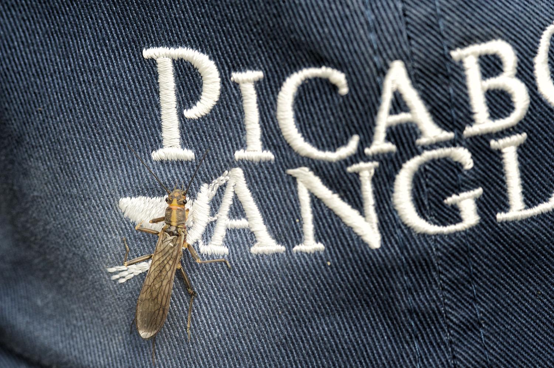 golden stone pa hat nick price photo.jpg