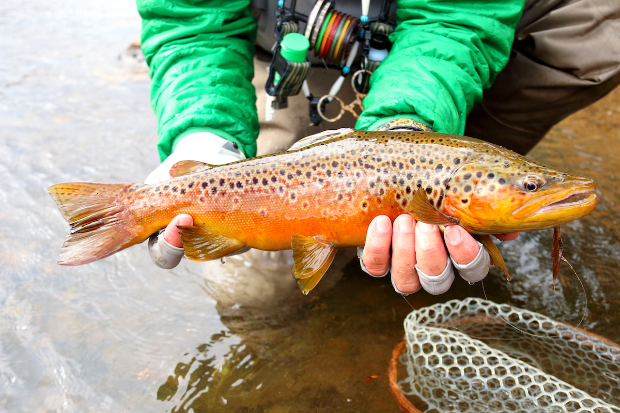 Fly Fishing Report for Sun Valley, Idaho — Picabo Angler