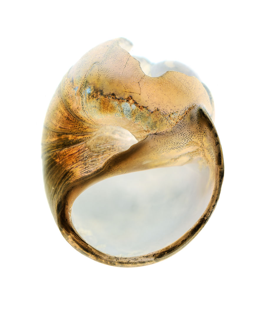 shells055-i.jpg