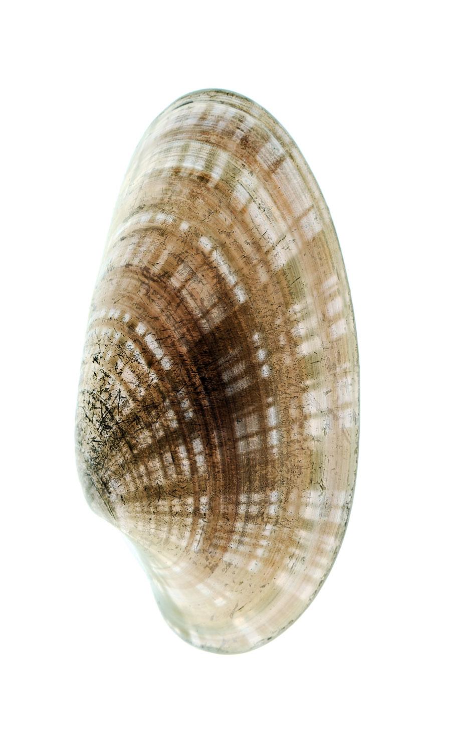 shells052-i.jpg