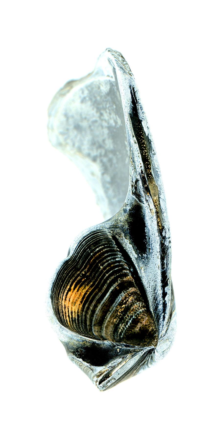 shell035-i.jpg