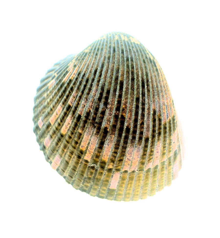 shell022-i.jpg