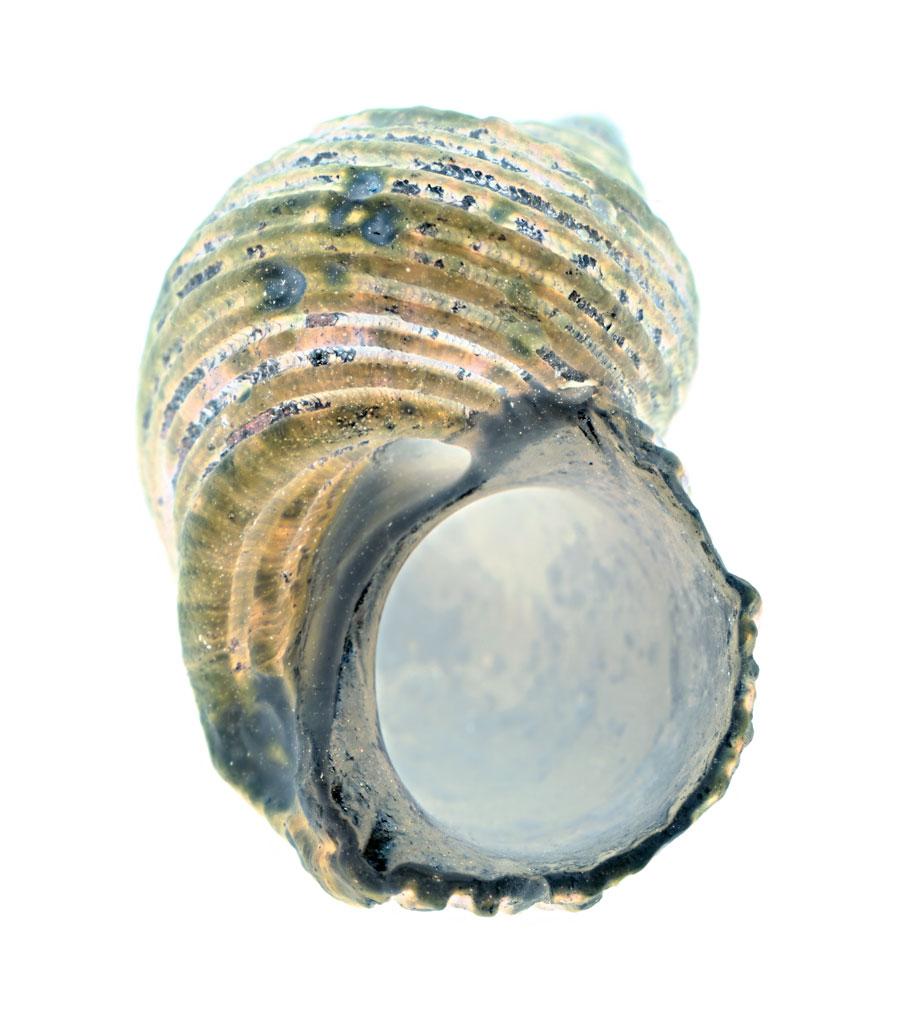 shell-105-1.jpg