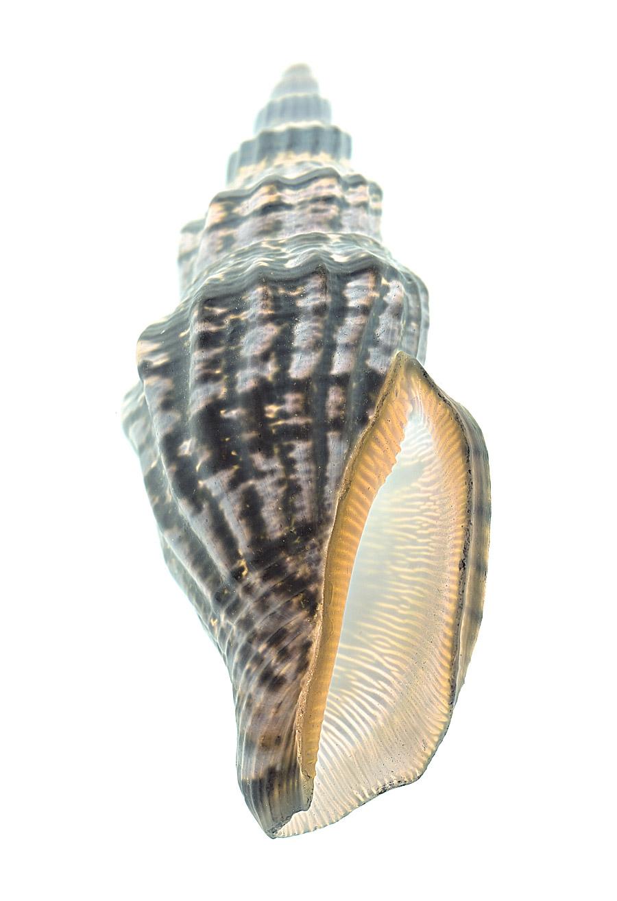 shell-115-i.jpg