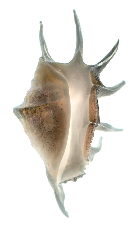 Shell-119-i.jpg
