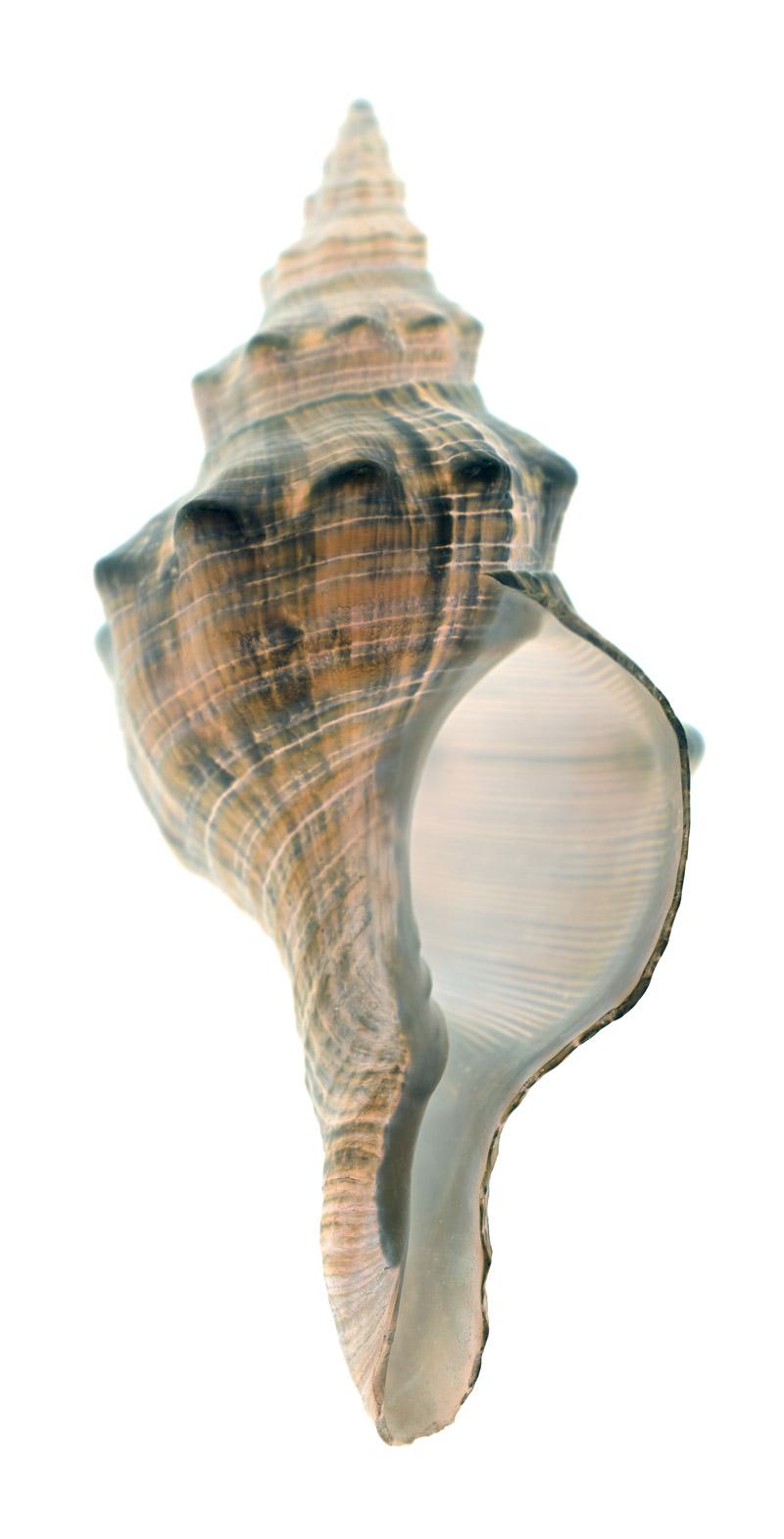 shell-122-i.jpg