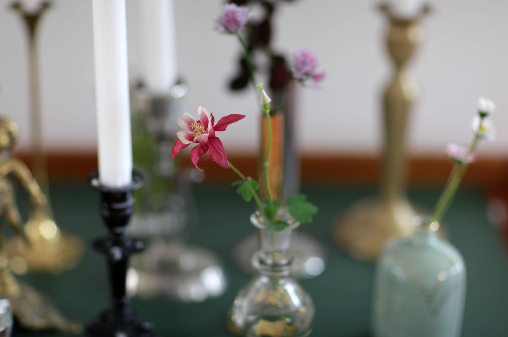 Anotherblog 7 blommor1.JPG