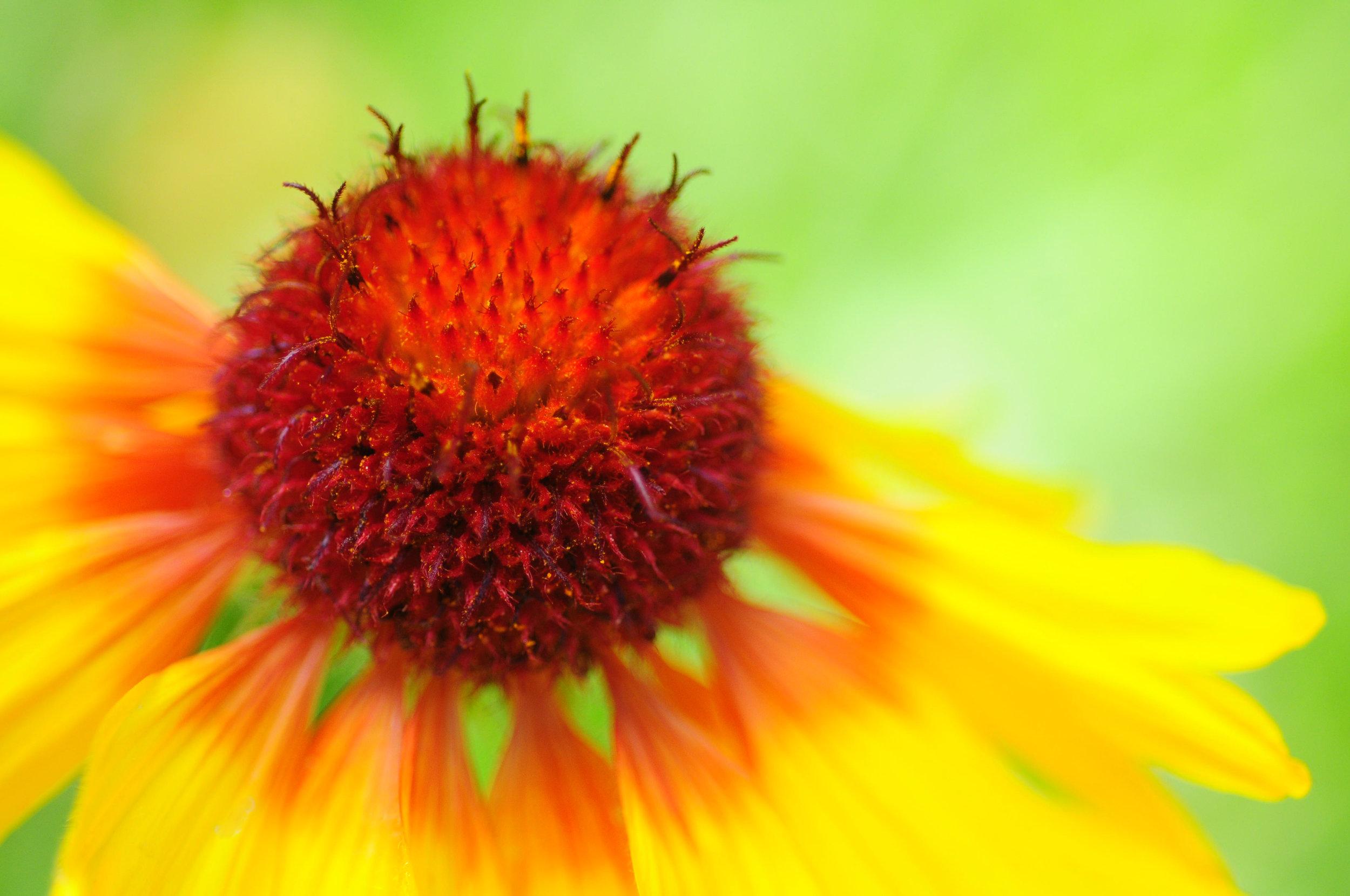 DSC_0266-flower2015 bridgett thompson.jpg
