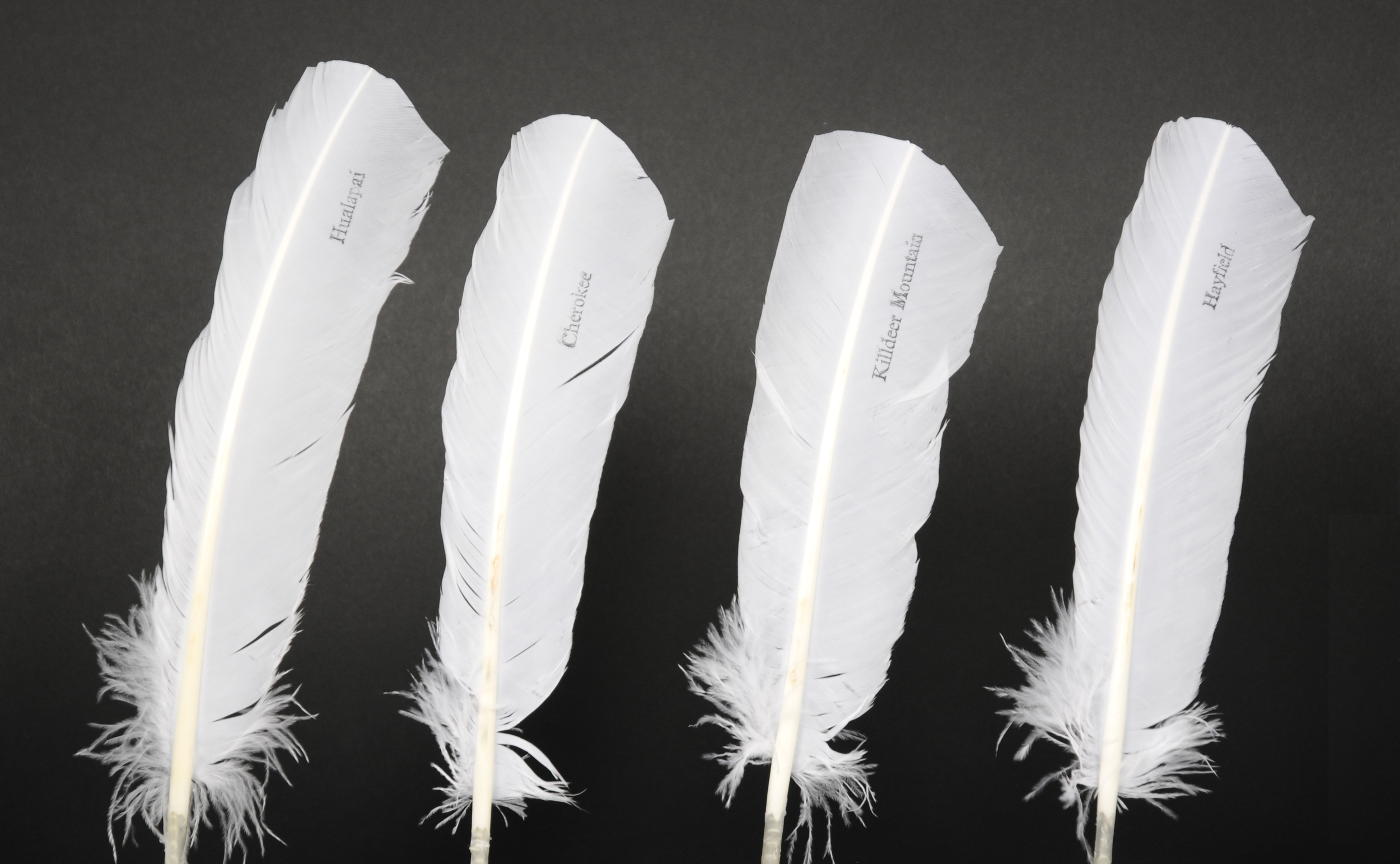 Standing feathers, each 300mm x 60mm