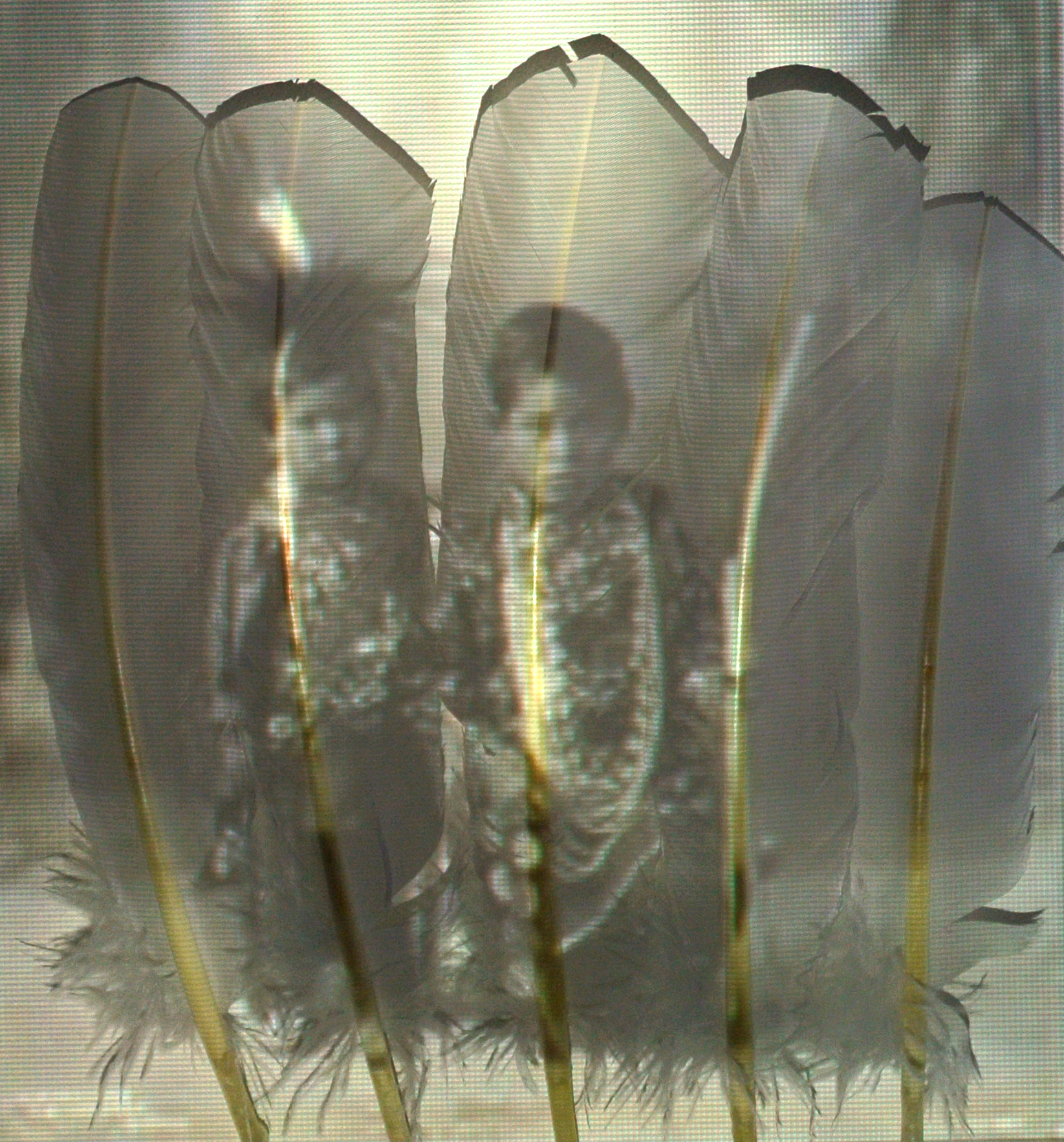 Boys behind feathers