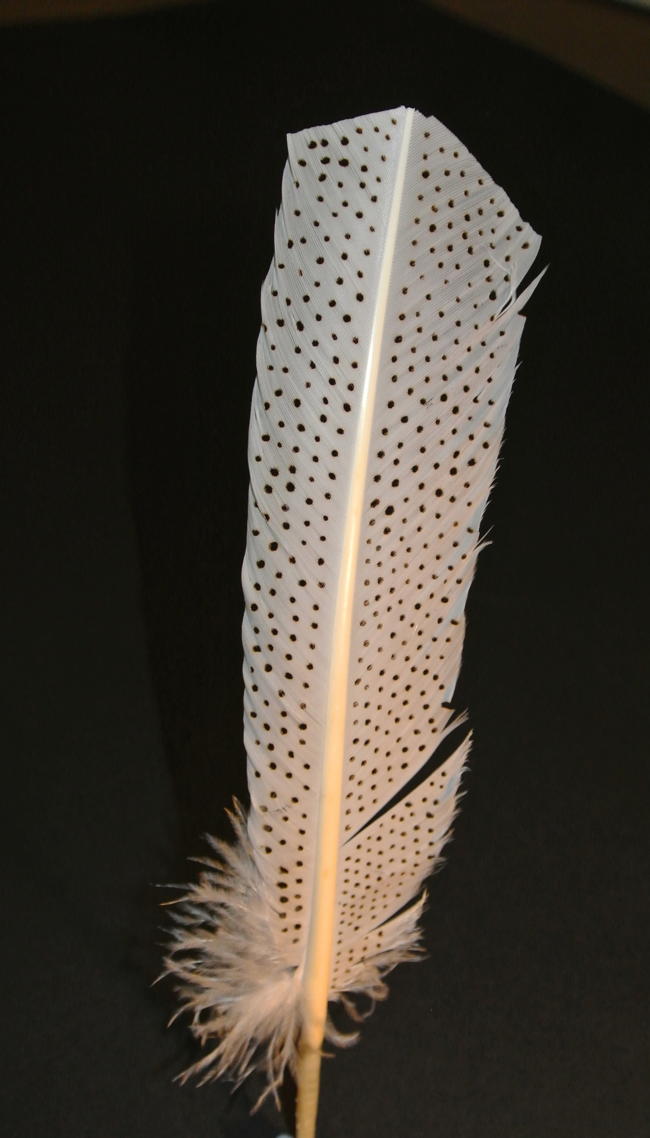 Burnt Feather 1