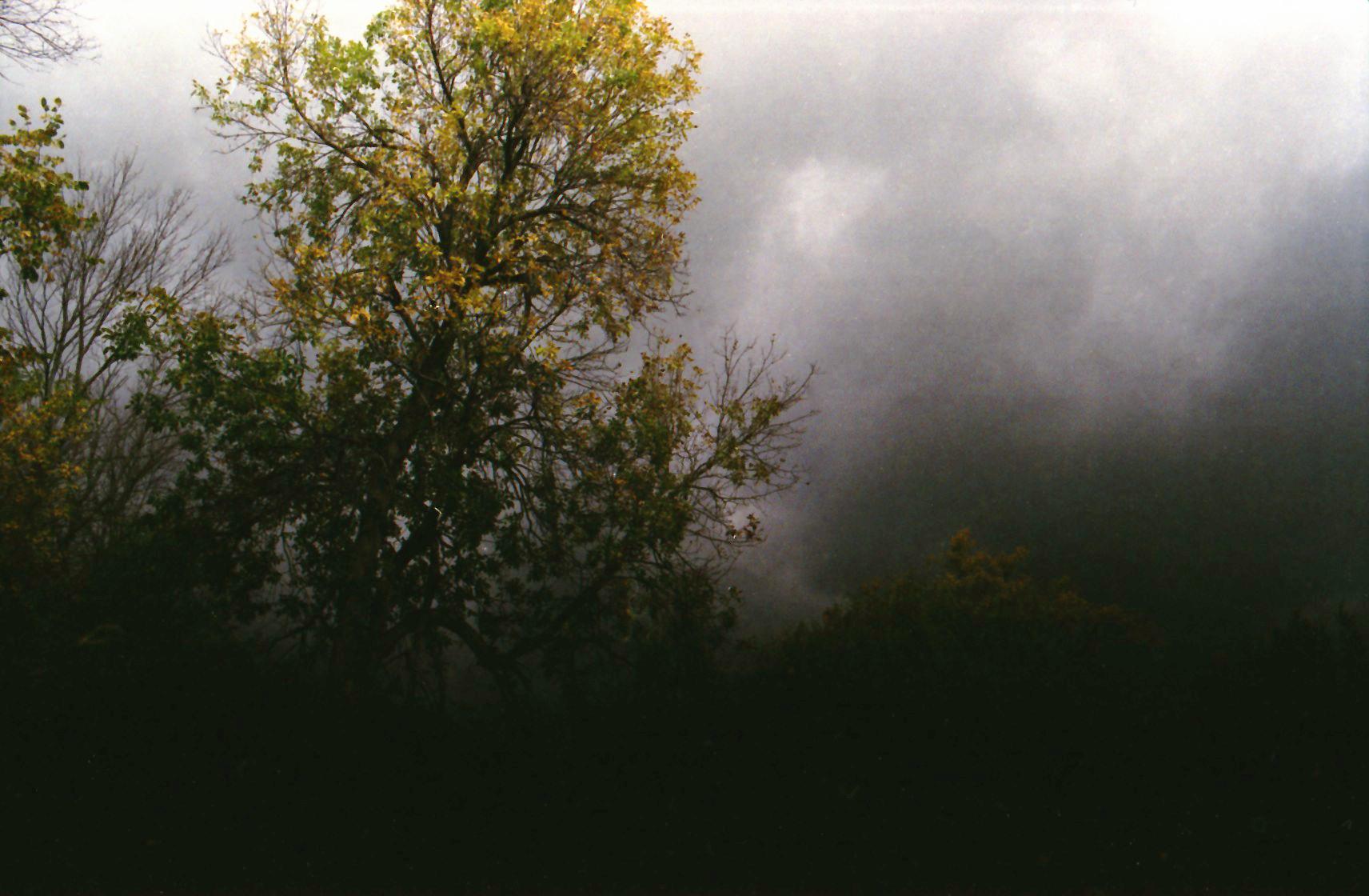 darktrees.jpg