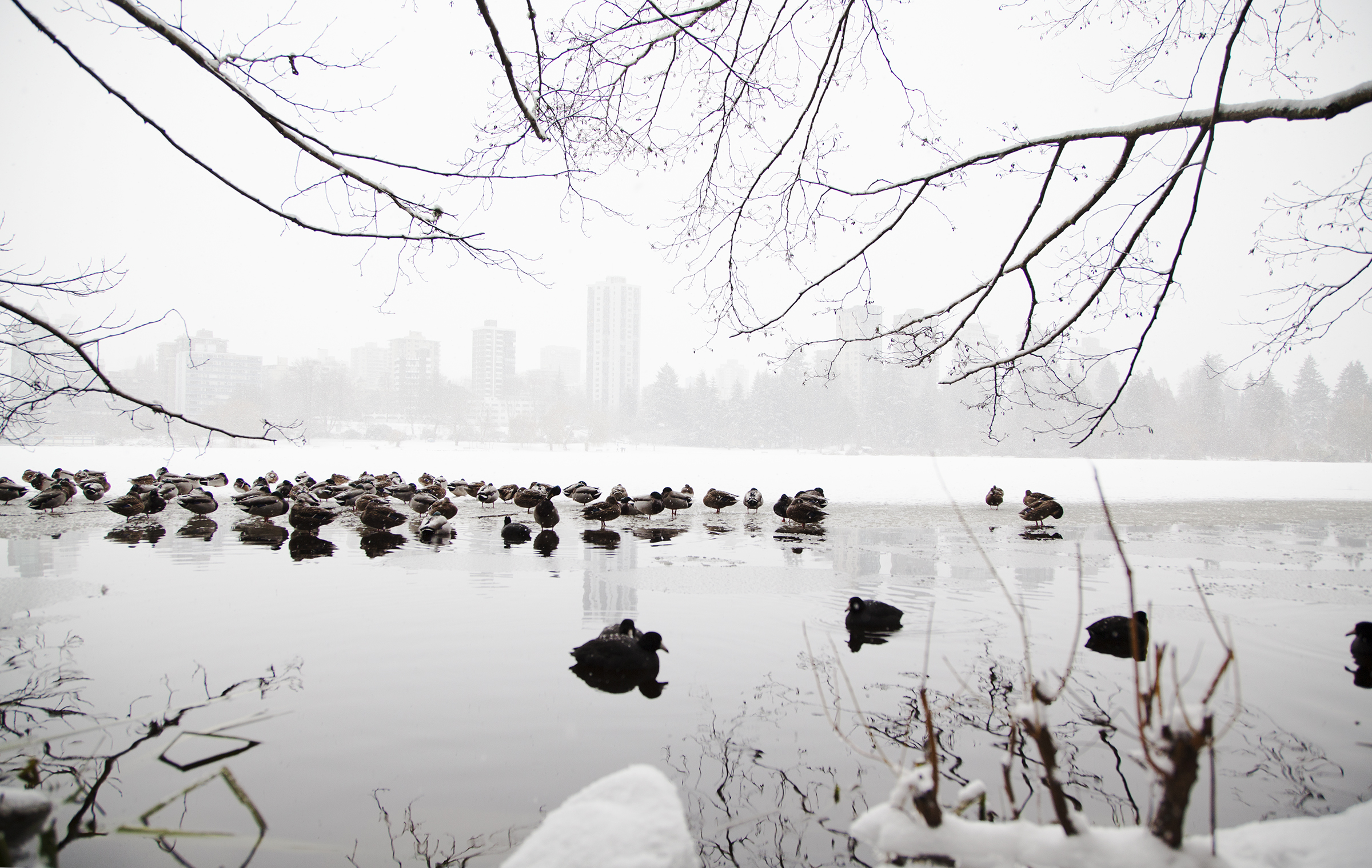 HC_WinterWalk2.jpg