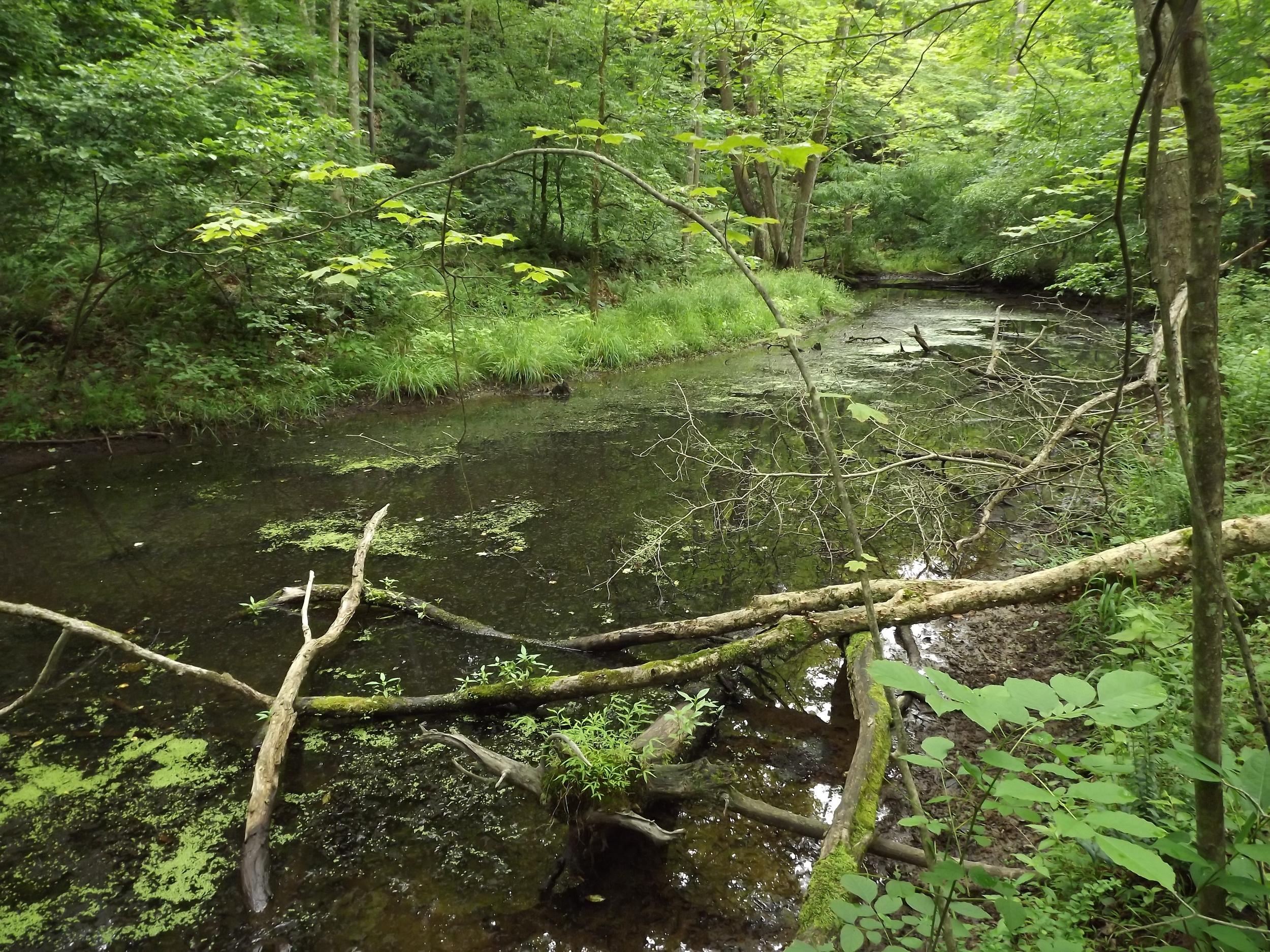 Little Sewickley Creek Backwater