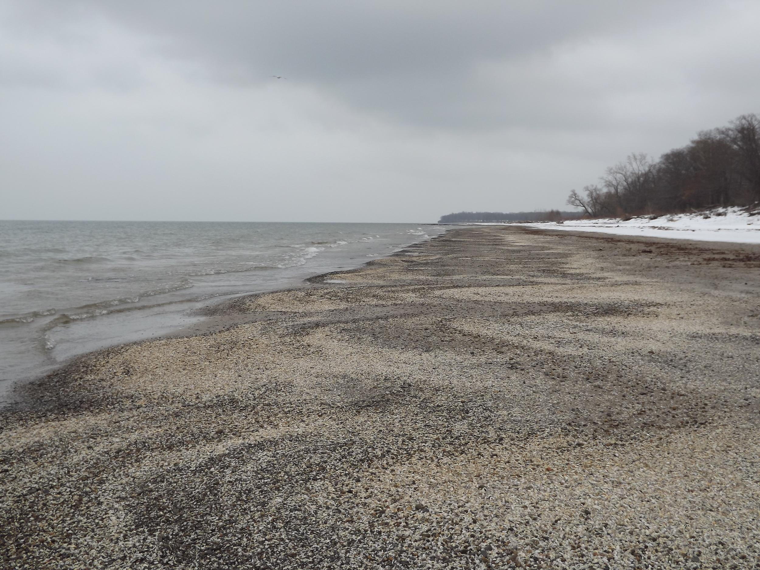 Shells along Shoreline