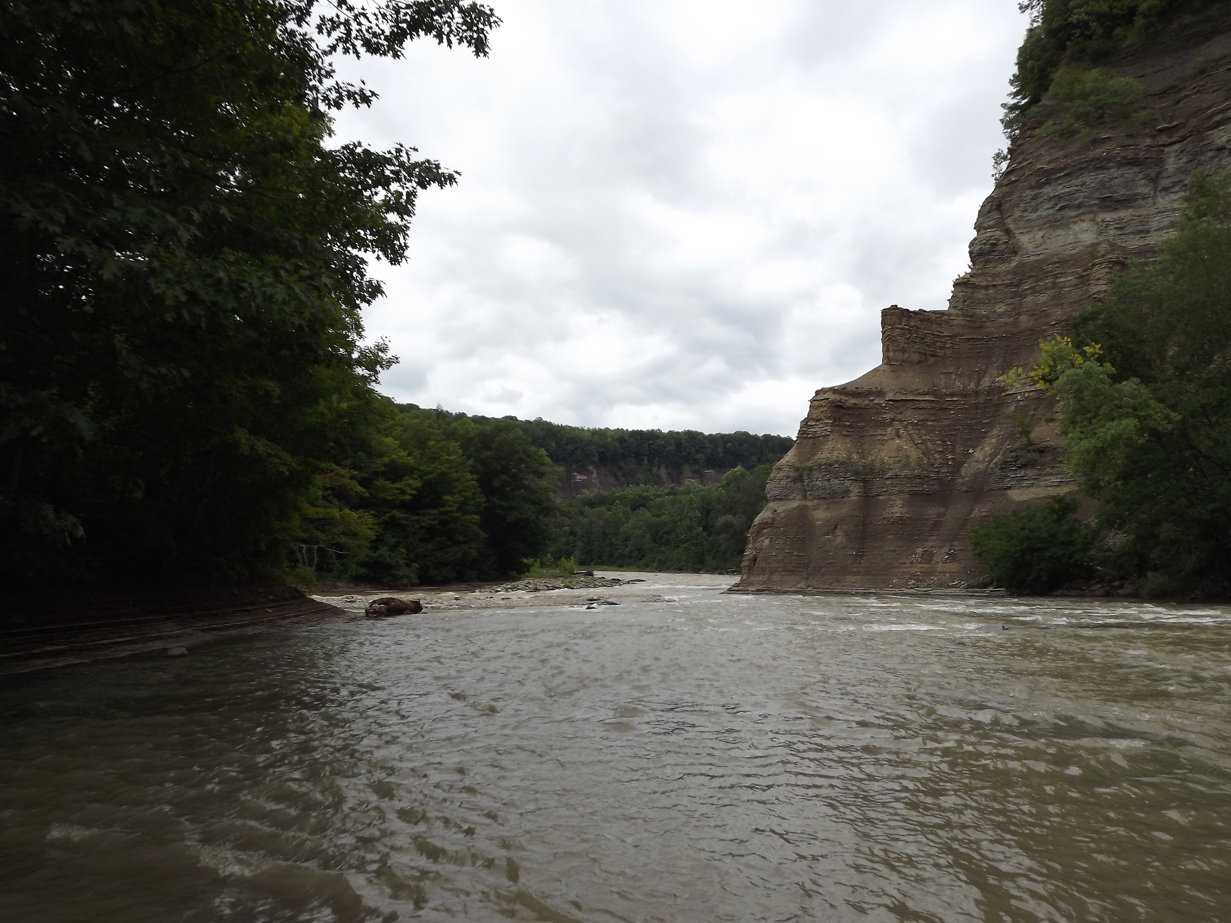 """Confluence of Main Branch and South Branch of Cattaraugus Creeks - The confluence of the Main and South branches is a beautiful place, even if the flat light in this picture doesn't do it justice. It's interesting that the South branch gets real wide and very shallow just before the confuence whereas the Main branch gets narrower and deeper with a pronounced stream channel of swifter water. Many people call the cliff on the right """"Indian Head,"""" since the shape of the cliff vaguely resembles a human head."""