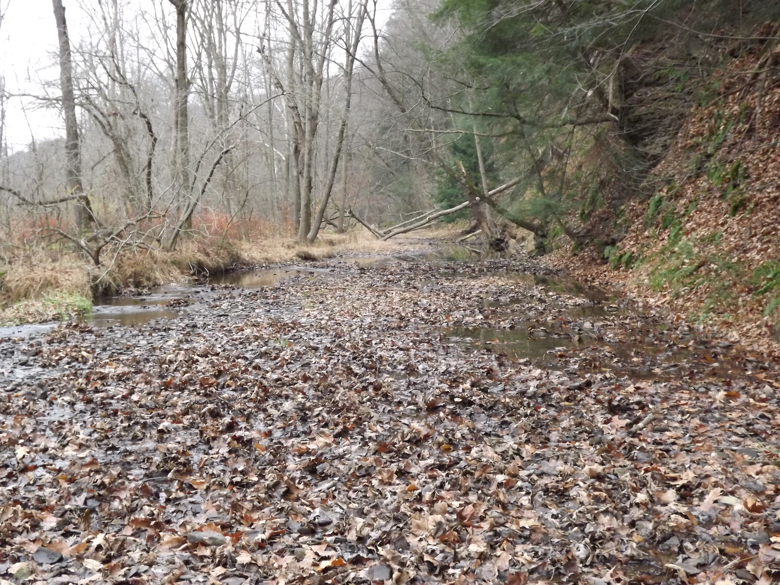 Creek with Leaves - Sections of Little Sewickley Creek, like in this picture, are absolutely choked with leaves right now, but after a few good rains or snow melts they'll be flushed into the Ohio and down river.