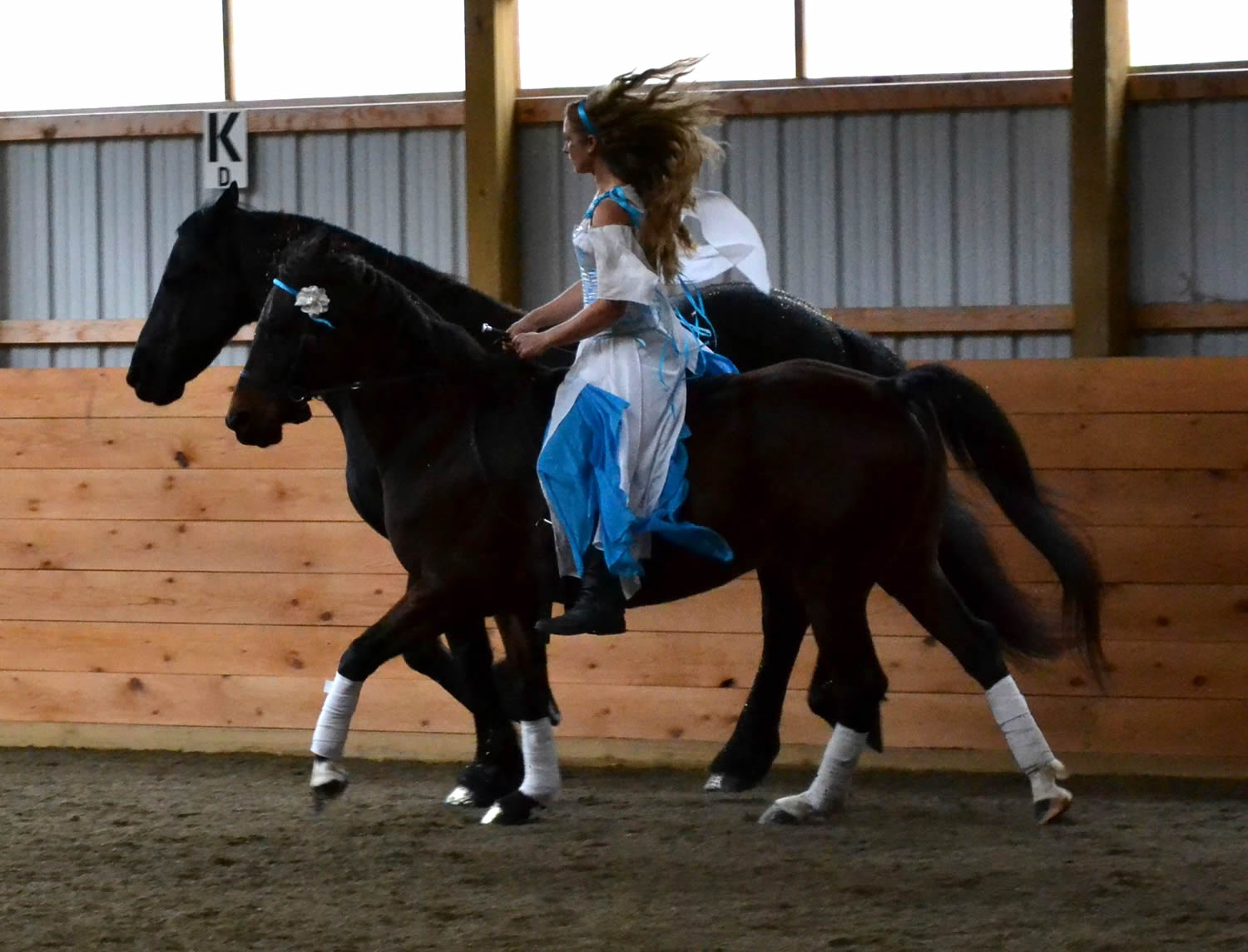 Liberty together canter.jpg