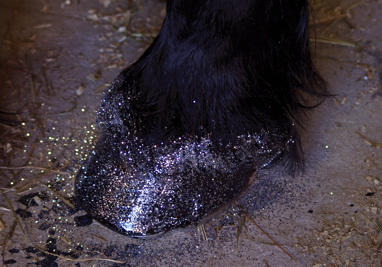 Douwe's silver hooves at the 2014 Baroque Horse Show where we performed. Photo taken by Karen Lendvay.