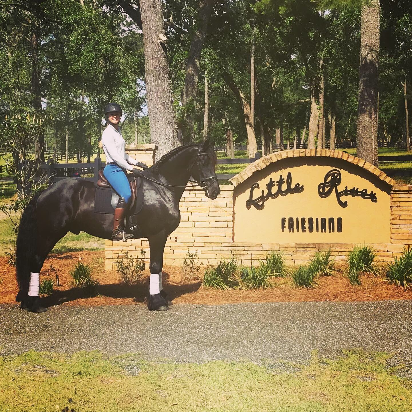 Sandra shown here on Co Fan S - world champion friesian gelding