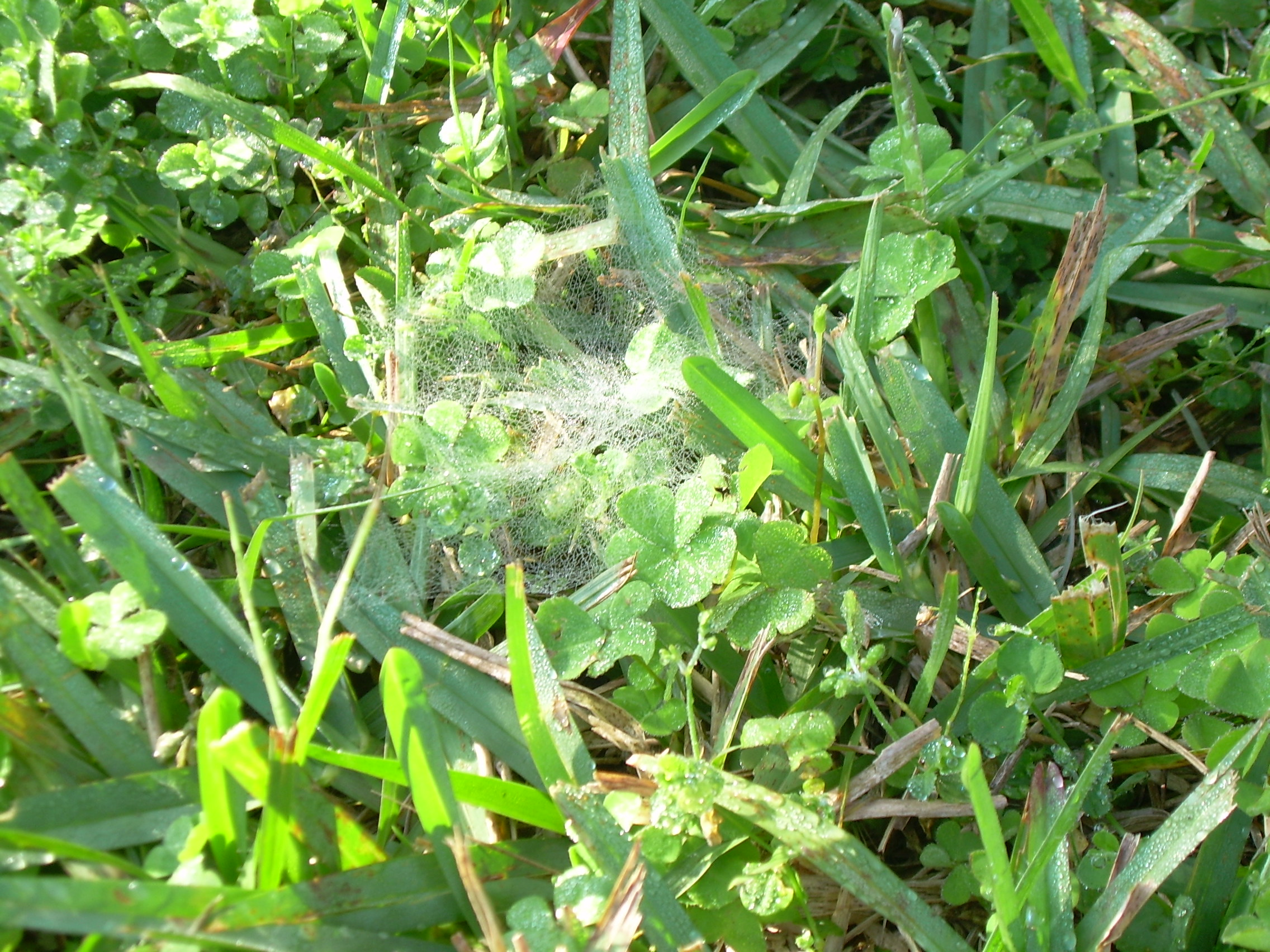 Little webs everywhere !