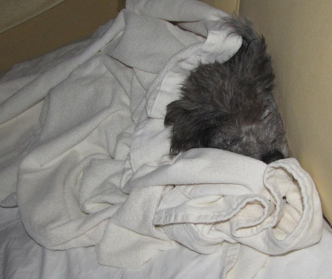 My cozy companion